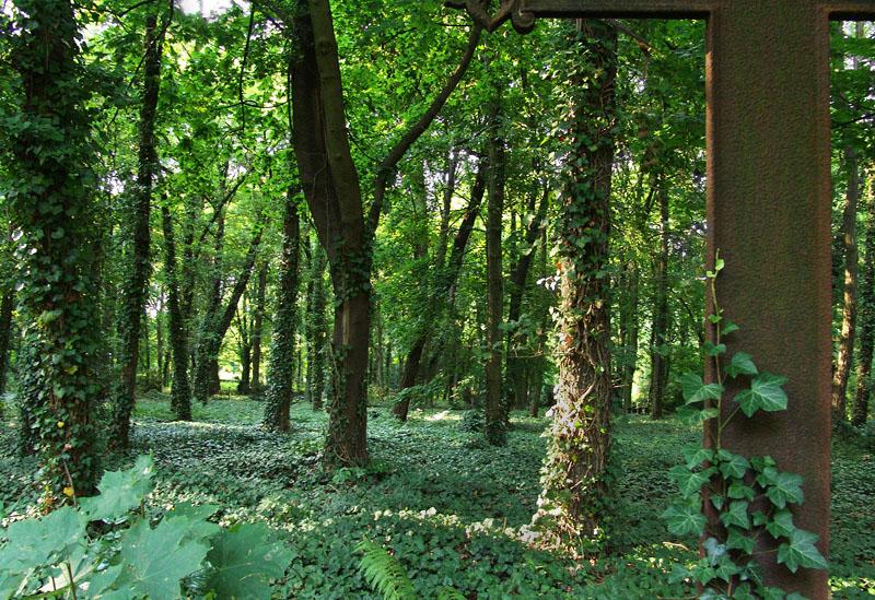 Urwald im Friedhof Nordend
